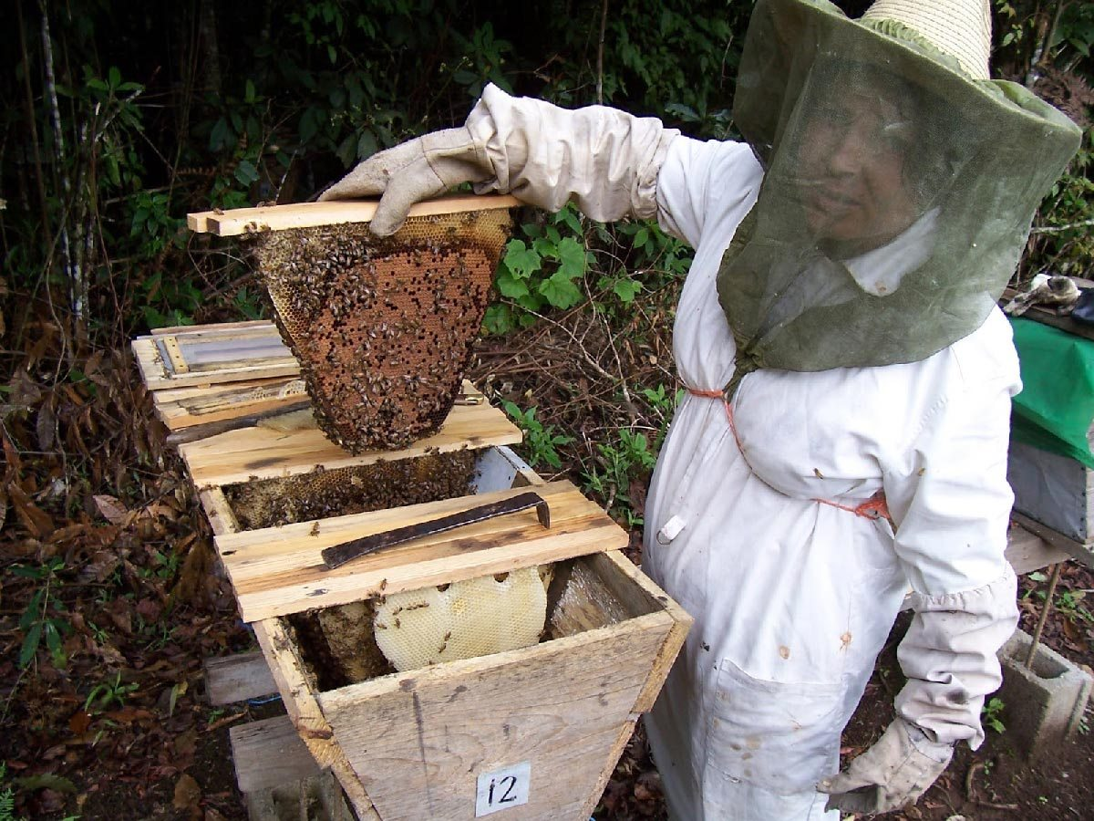 Repunte en producción de miel orgánica
